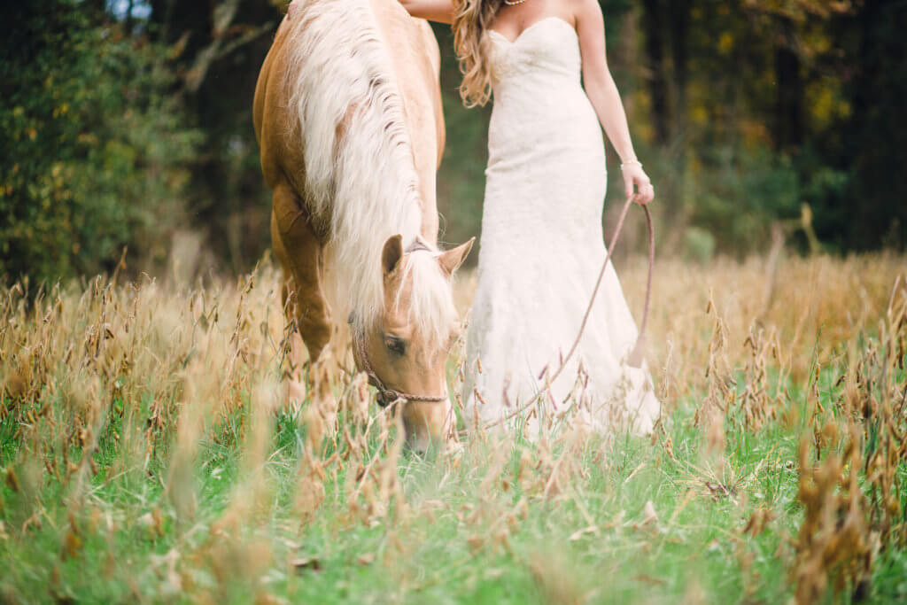 Bride and horse in Knoxville Tennessee