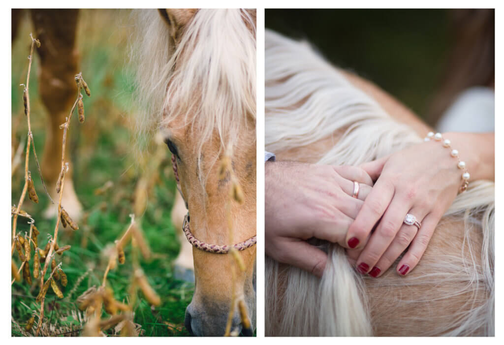 Bride and groom with wedding bands with hands on top of horses mane